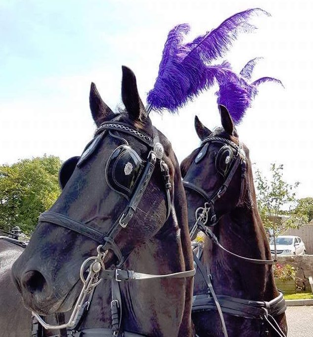 Kilvey-Carriages-Custom-Plumes-Colourful-Plumes-Cardiff-Llanelli-Swansea-Black-Horse-Carriage