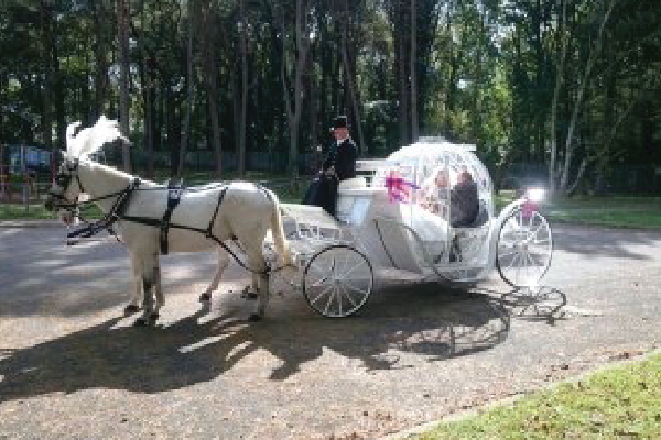 Kilvey-Carriages-Weddings-Services-Gallery-Images-10