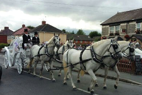 Kilvey-Carriages-Weddings-Services-Gallery-Images-15